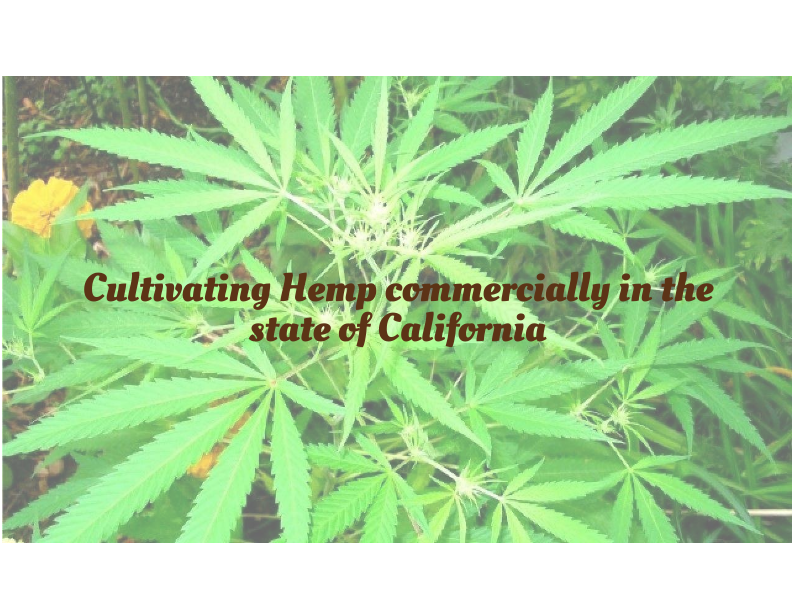 Cultivating Hemp commercially in the state of California